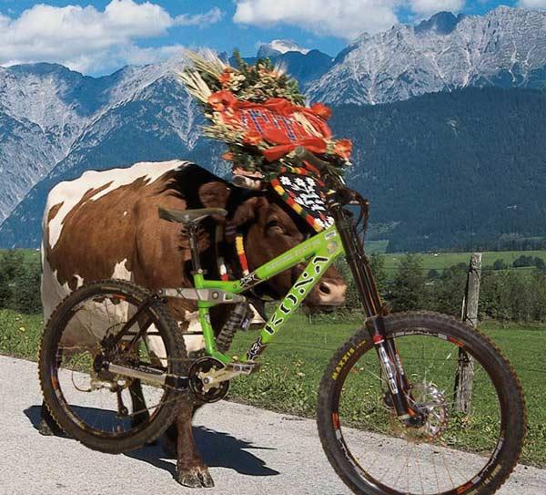 Bikeabtrieb im Bikepark Leogang: Geschmückte Bikes werden prämiert Foto: Bikepark Leogang