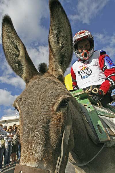 Donkey Cross: Motocrosser auf dem Rücken von Eseln Foto: reporter-images.gr